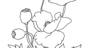 Poppies Coloring Pages - Best Coloring Pages For Kids